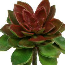 Mehevä kiviruusu 6cm vihreä 6kpl