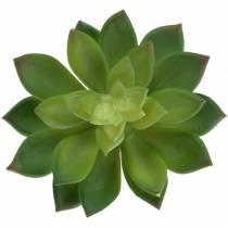 Sukkulentti Houseleek Vihreä 14cm