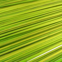 Dekotikut Tonkin 70cm vaaleanvihreä 150kpl
