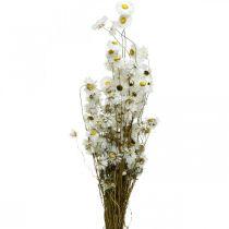 Kuivatut kukat Acroclinium Valkoiset kukat kuivattu kukkakauppa 60g