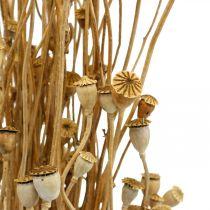 Kuivatut kukat Unikko Kapselit Luonto Kuivattu Luonnon Kuivattu Kuiva Kuiva Deco Nippu 100g