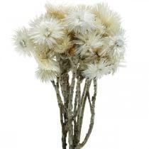Kuivatut kukat korkki kukkia luonnonvalkoinen, olkikukat, kuivatut kukat kimppu H33cm