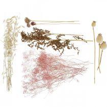 Kuivatut kukat laatikko Valkoinen vaaleanpunainen sekoitus kuivattu kukkasarja