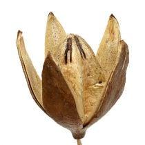 Villi lilja tikulla Luonnon värit Ø6,5cm L55cm 45kpl