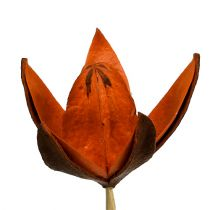 Villi lilja kepillä oranssi 45p
