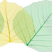Willow Skeletton omena vihreä / keltainen 200p.