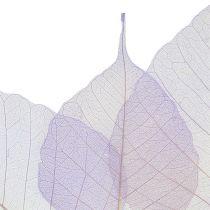 Paju jättää luuranko vaalean violetti 200p.