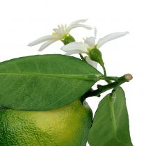 Sitruunat kukkivat 9,5cm vihreä 4kpl