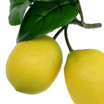 Sitruunan oksa 2 sitruunaa 24cm keltainen