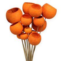 Bell Cup Mix on a Stick Orange 15kpl