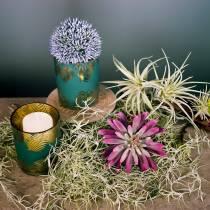 Mehevä kasvi 15cm violetti