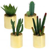 Kaktusvihreä kultaisessa ruukussa 12cm - 17cm 4kpl