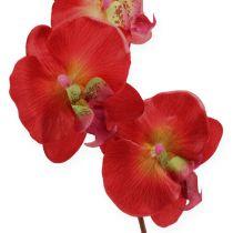 Koristeellinen orkidea punainen 68cm