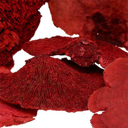 Puu sieni punainen 1kg