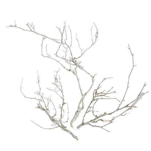 Kuiva puu valkoinen pesty 500g