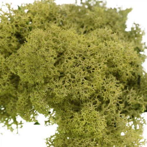 Koristesammal käsitöihin Vaaleanvihreä luonnollinen sammal säilöttynä 40g