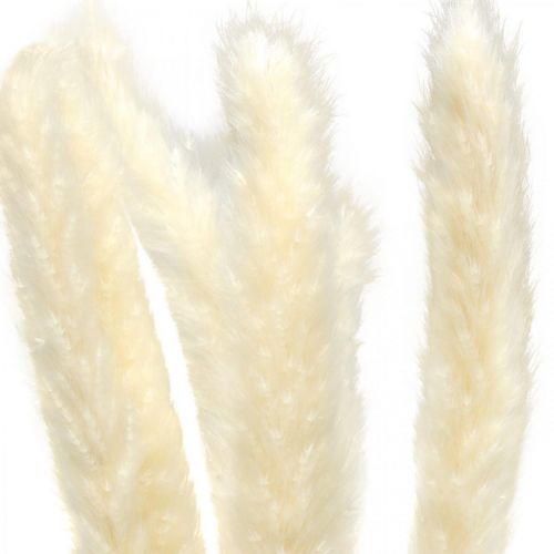 Kuivattu Pampas Grass Cream kuivalle kukkakimppu 65-75cm 6kpl 6kpl