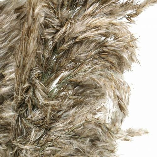 Kuivattu pampas ruoho luonto kuiva kukkakimppu 70-75cm 6kpl 6kpl