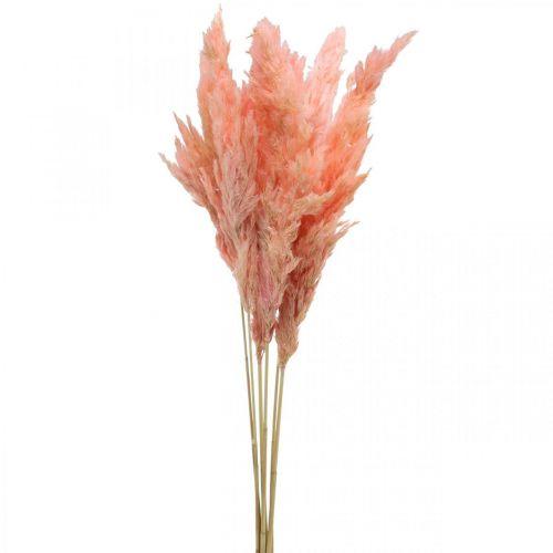 Pampas ruoho kuivattu Vaaleanpunainen kuivakukkakauppa 65-75cm 6kpl kimpussa