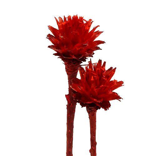 Plumosum 1 punainen 25kpl