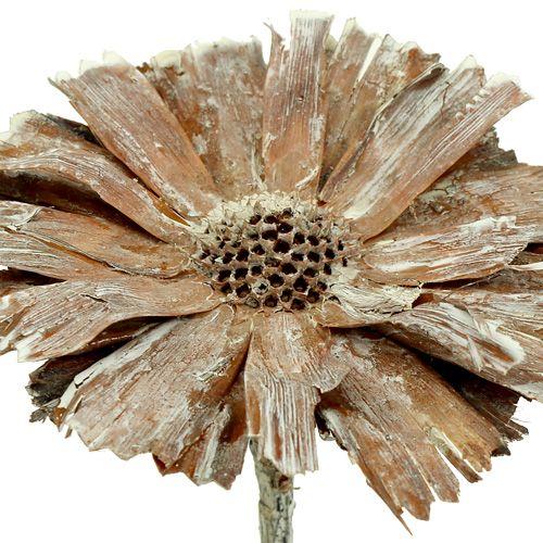 Protea ruusuke 8-9cm valkoinen pesty 25kpl