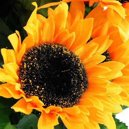 Auringonkukan pensas 40cm