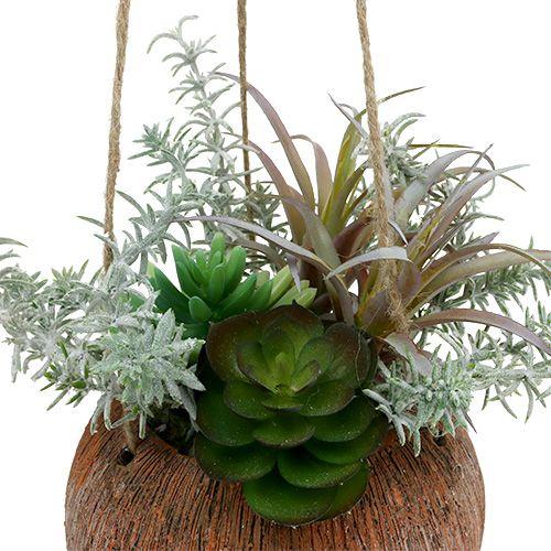 Mehikasvit vihreässä ruukussa ripustettavaksi 24 cm