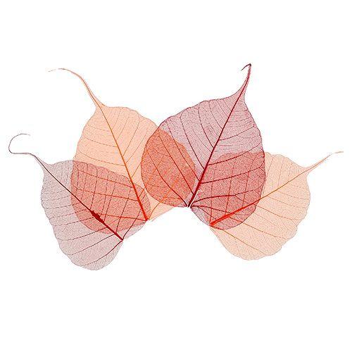 Willow Skeletton oranssi / punainen 200p.