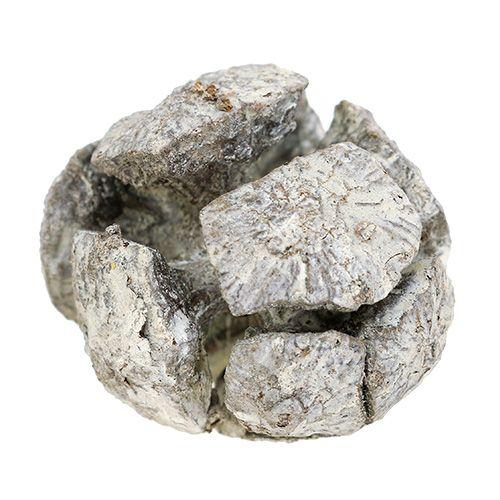 Sypressi käpyjä 3cm Valkoinen pesty 500g